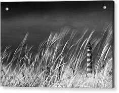 Against The Wind Acrylic Print by Rui Correia