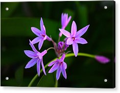 Acrylic Print featuring the photograph Agapanthus by Richard Stephen