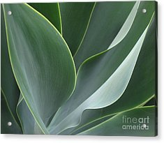 Acrylic Print featuring the photograph Agave 3 by Ranjini Kandasamy