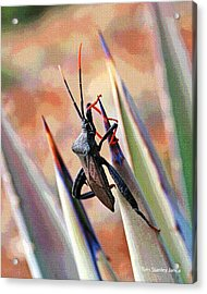 Acrylic Print featuring the photograph Agave Bug  by Tom Janca