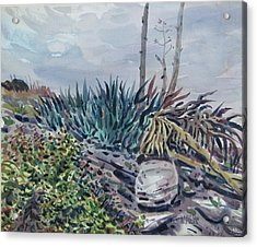Agave Acrylic Print by Donald Maier