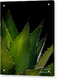 Agave Glow Acrylic Print by Ruth Jolly