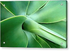 Agave Heart Acrylic Print by Peter Mooyman
