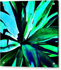 Agave - High Contrast Art By Sharon Cummings Acrylic Print