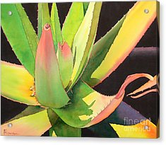 Agave Acrylic Print by Robert Hooper