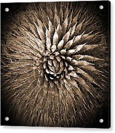 Agave Spikes Sepia Acrylic Print