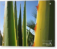 Agaves And Palm Trees Acrylic Print