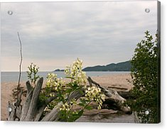 Acrylic Print featuring the photograph Agawa Bay by Paula Brown