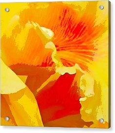 Aglow Acrylic Print by John Freidenberg