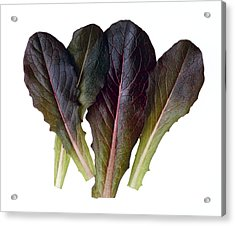 Agriculture - Baby Red Romaine Leaves Acrylic Print by Ed Young