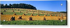 Agriculture - Contour Strips Acrylic Print by Timothy Hearsum
