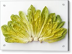 Agriculture - Romaine Lettuce Hearts Acrylic Print by Ed Young