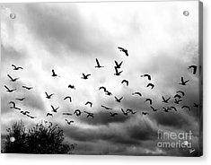 Ahead Of The Storm Acrylic Print