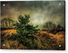Acrylic Print featuring the photograph Ainsdale Dunes In Winter by Brian Tarr