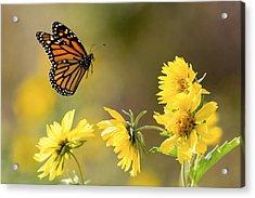 Air Monarch Acrylic Print