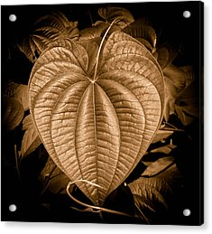 Air Potato Heart In Sepia Acrylic Print
