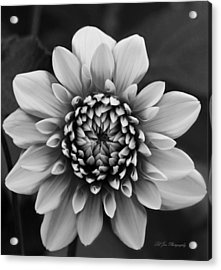 Ala Mode Dahlia In Black And White Acrylic Print