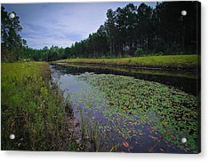 Acrylic Print featuring the photograph Alabama Country by Julie Andel