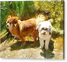 Acrylic Print featuring the painting Alameda Bestfriends by Linda Weinstock