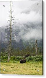 Alaska Musk Ox Acrylic Print by Saya Studios