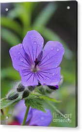 Acrylic Print featuring the photograph Alaska Wildflower by Kate Avery