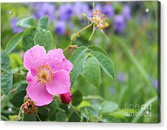 Acrylic Print featuring the photograph Alaska Wildflowers by Kate Avery