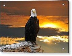 Alaskan Bald Eagle At Sunset Acrylic Print