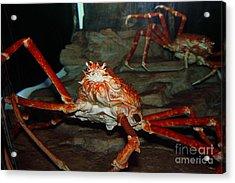 Alaskan King Crab 5d24125 Acrylic Print by Wingsdomain Art and Photography