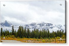 Alaskan Roadside Acrylic Print by David Nichols