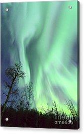Alberta Aurora Acrylic Print by Dan Jurak