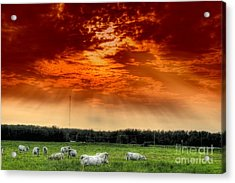 Acrylic Print featuring the photograph Alberta Canada Cattle Herd Hdr Sky Clouds Forest by Paul Fearn