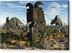 Albertaceratops Dinosaurs Grazing Acrylic Print by Mark Stevenson