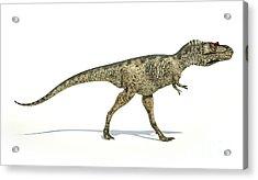 Albertosaurus Dinosaur On White Acrylic Print