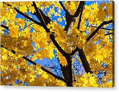 Alchemy Of Nature - Refining The Sungold Acrylic Print by Alexander Senin