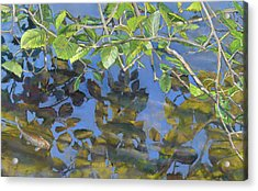 Alder Leaves And Koi Acrylic Print
