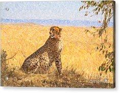 Alert Cheetah Acinonyx Jubatus Acrylic Print