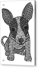 Alert - Chihuahua Acrylic Print
