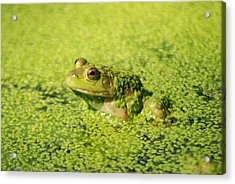 Algae Covered Frog Acrylic Print by Optical Playground By MP Ray