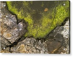 Algae Pool Abstract Photo Acrylic Print by Peter J Sucy