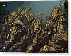 Algae Acrylic Print by Ron Harpham