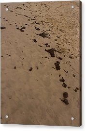 Algae Trail In The Sand Acrylic Print by Sandra Pena de Ortiz
