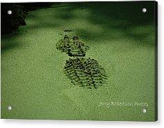 Algaegator..... Acrylic Print by Jerry Robertson