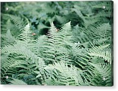 Acrylic Print featuring the photograph Algonquin Ferns by David Porteus