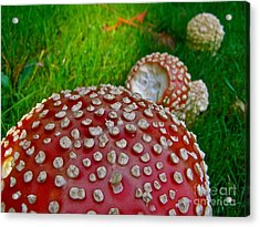 Alice's Shrooms Acrylic Print