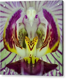 Acrylic Print featuring the photograph Alien Bird Flower by Kevin Munro