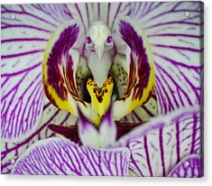Alien Moth Orchid Acrylic Print by Kevin Munro