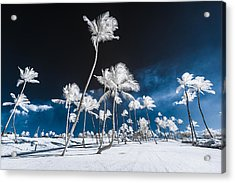 Alien Palm Trees Acrylic Print