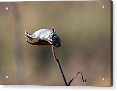 Alien Seed Pod? Acrylic Print by Kevin Snider