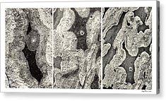 Alien Triptych Landscape Bw Acrylic Print