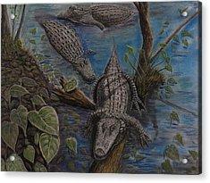 Aligators At Rest Acrylic Print by Richard Goohs